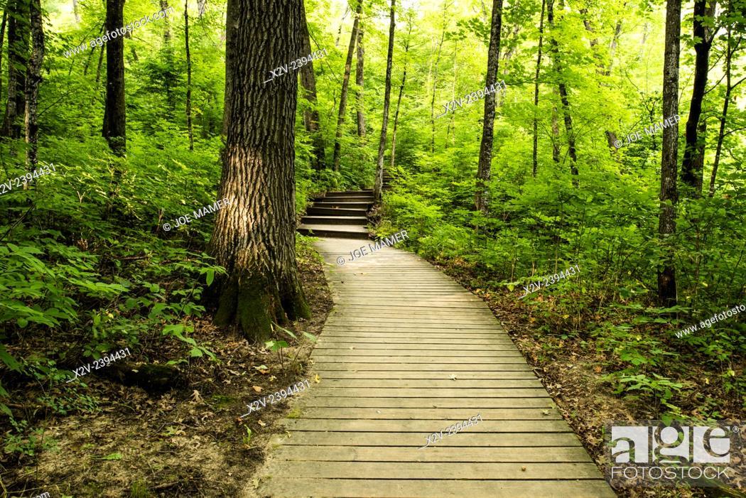 Stock Photo: board walk through Big Woods State Park.