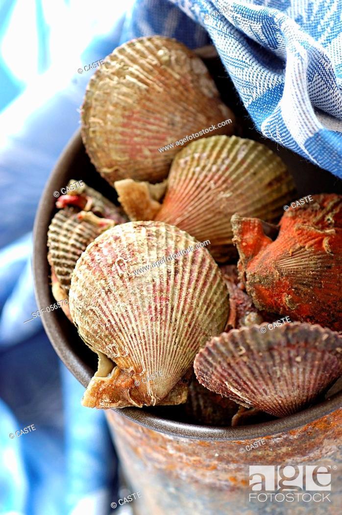 Stock Photo: petoncle scallops.
