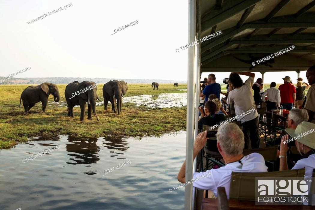 Imagen: Tourists on a boat cruise on the Chobe River observe a group of feeding African Elephants (Loxodonta africana). Chobe National Park, Botswana.