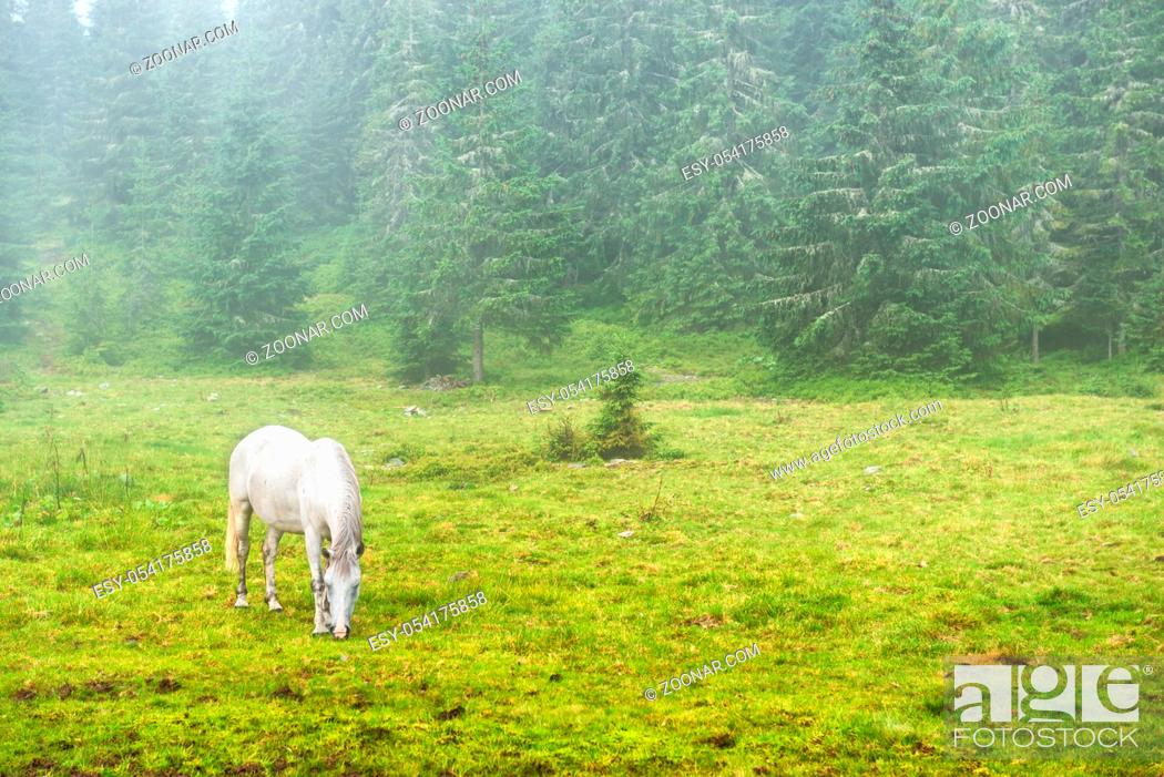 Stock Photo: White horse grazing on a green field with fog.