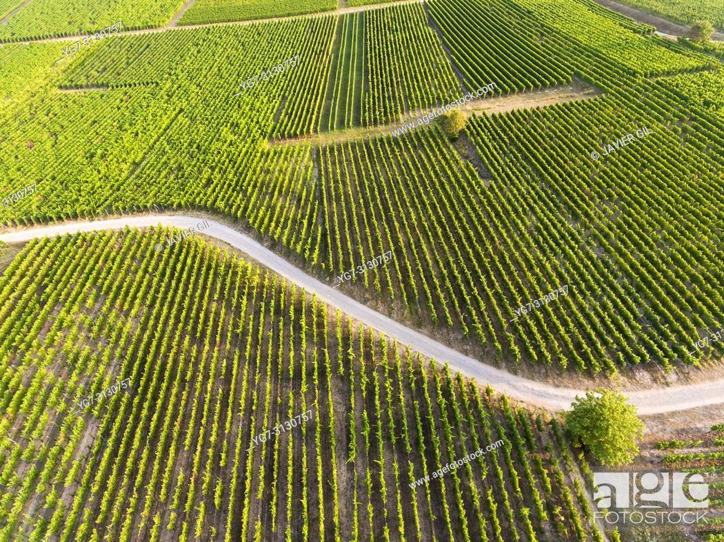 Stock Photo: Vineyards in Eguisheim, Haut-Rhin, Grand Est, France.