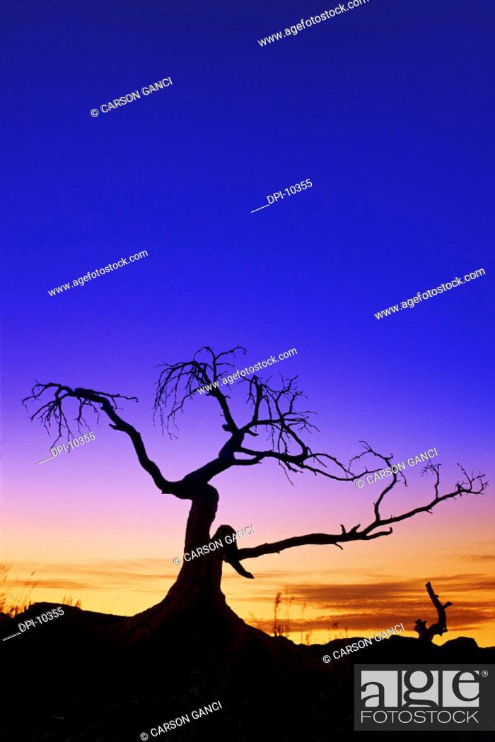 Stock Photo: Burmis Tree.