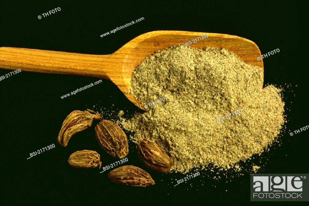 Stock Photo: CARDAMOM<BR>Elettaria cardamomum.