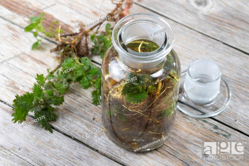 Stock Photo: stinging nettle (Urtica dioica), tincture made from roots of stinking nettle, Germany.