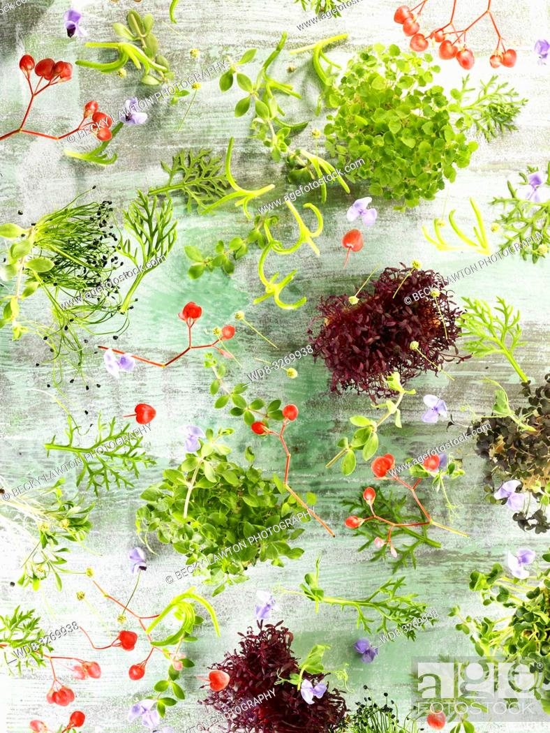 Stock Photo: Composition with sprouts of aromatic herbs and flowers, flying on greenish gray background.