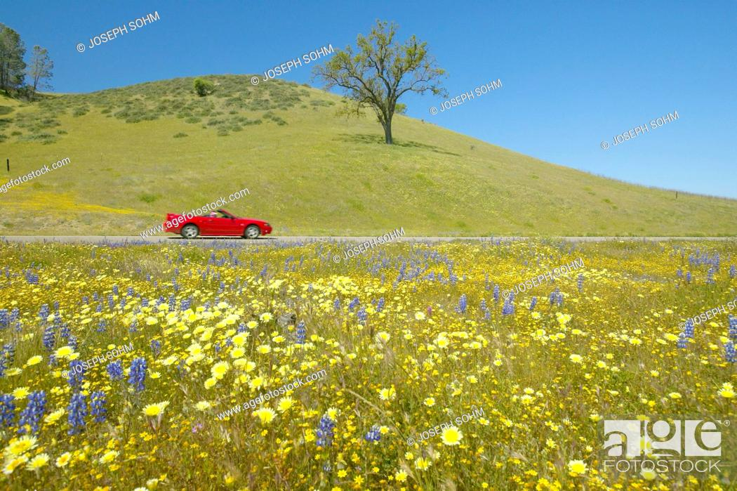 Stock Photo: Red convertible driving past colorful bouquet of spring flowers blossoming off Route 58 on Shell Creek road, West of Bakersfield in CA.