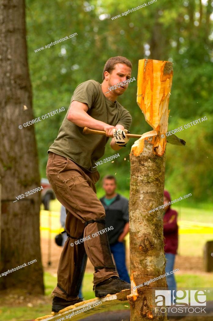 Stock Photo: Springboard chop, Linn County Loggers' Jamboree, Linn County Pioneer Picnic, Pioneer Park, Brownsville, Oregon.