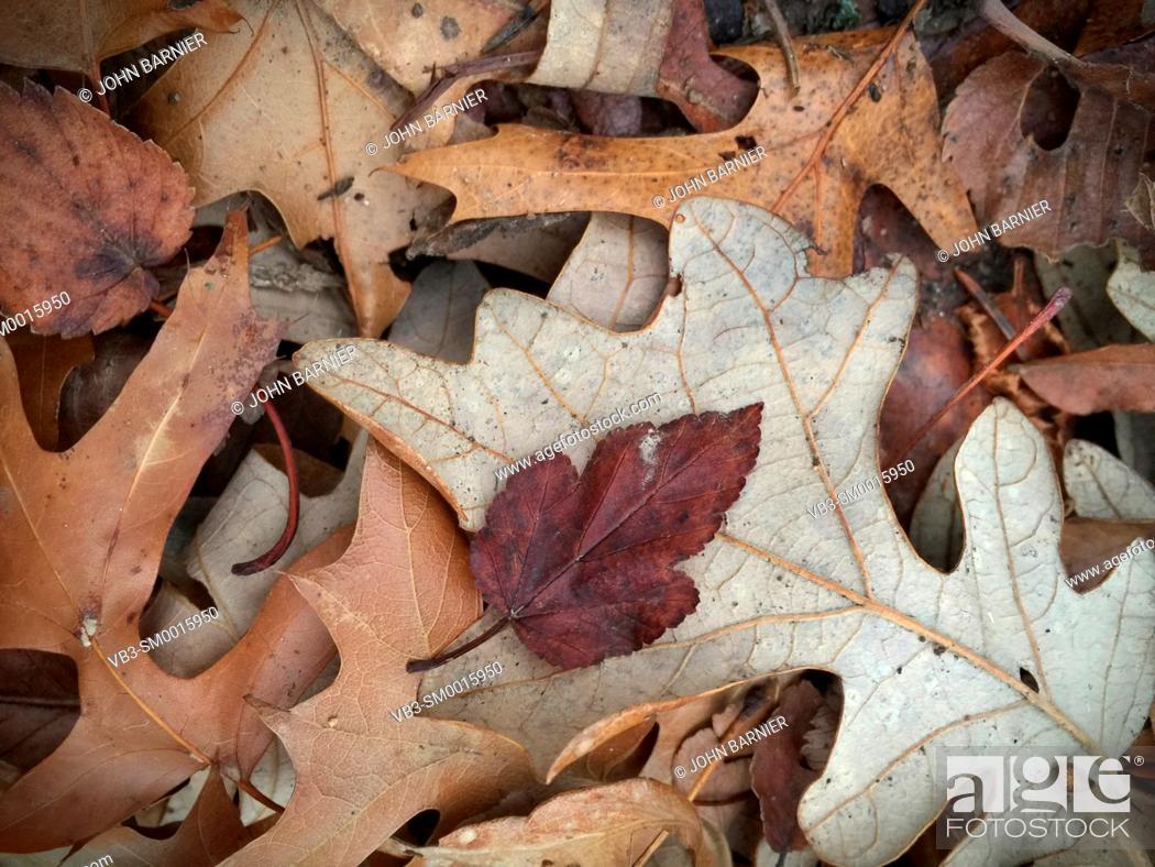 Stock Photo: Dry fallen leaves in early winter.