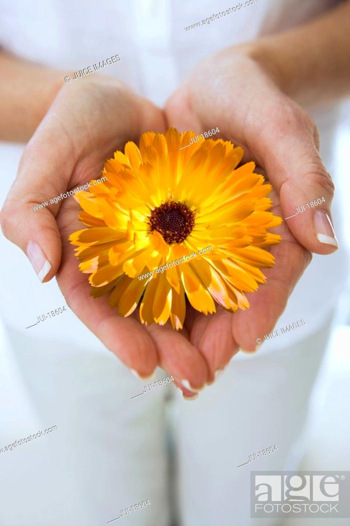 Stock Photo: Close up of womanÆs hands cupping flower.