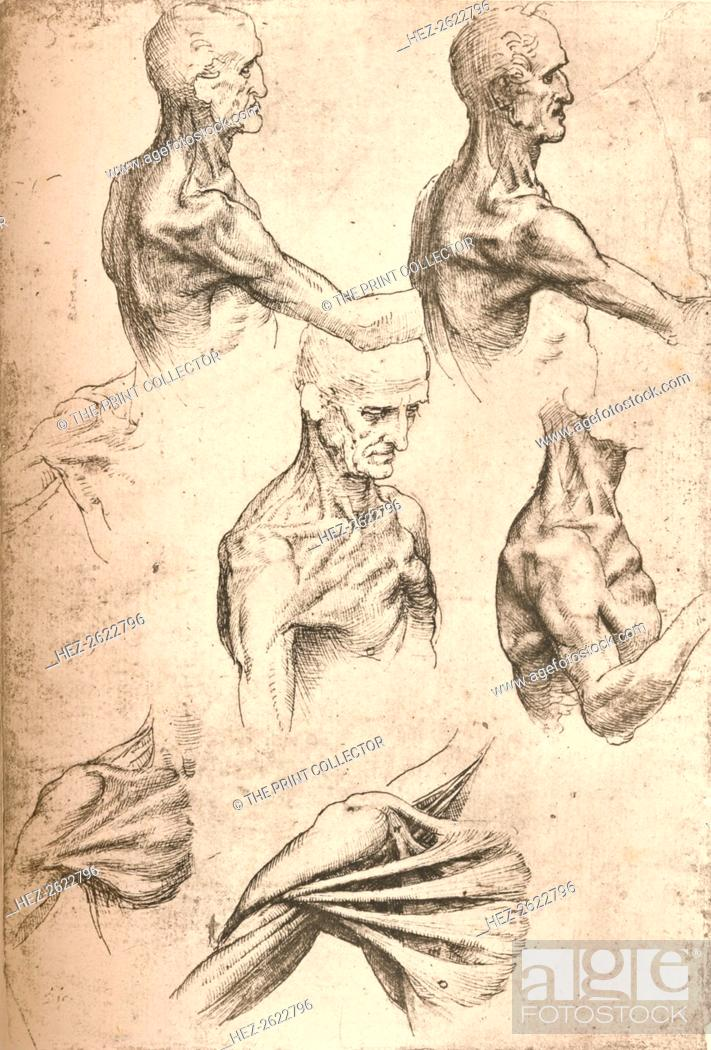 Anatomical Drawing C1472 C1519 1883 From The Literary Works Of