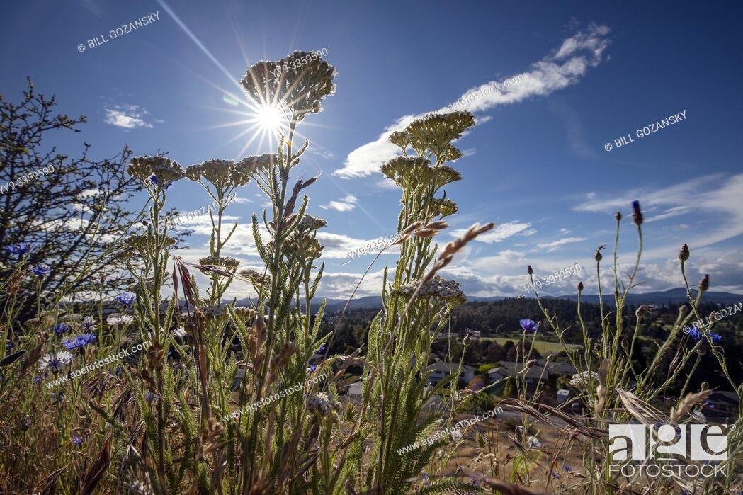Stock Photo: Highrock Park views in Esquimalt Township - Victoria, Vancouver Island, British Columbia, Canada.