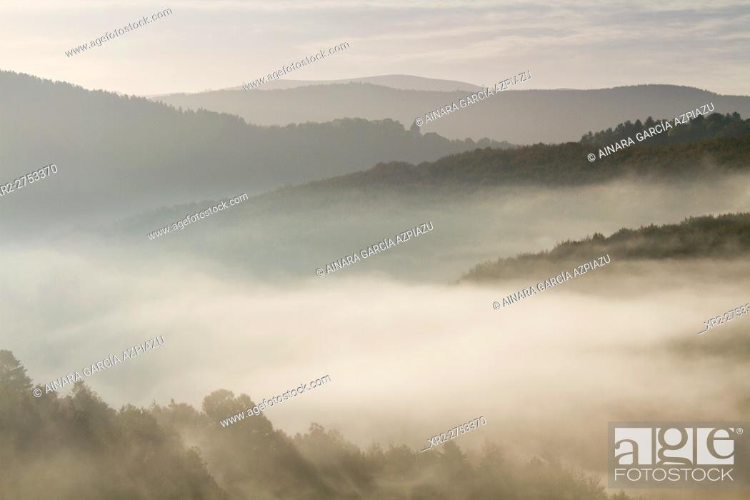 Stock Photo: Mist in Irati forest, Navarre, Spain.