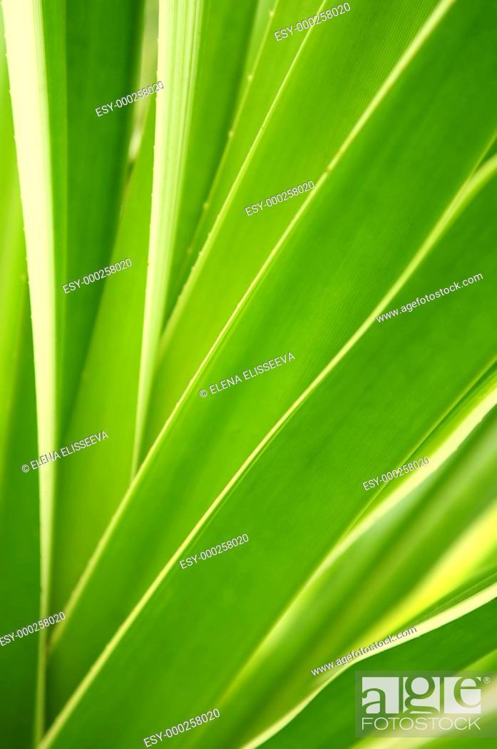 Photo de stock: Tropical leaves.
