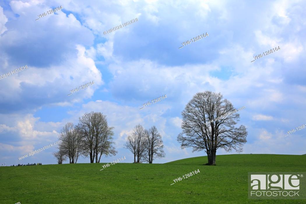 Stock Photo: Germany, Bavaria, Upper Bavaria, Bodelsberg.