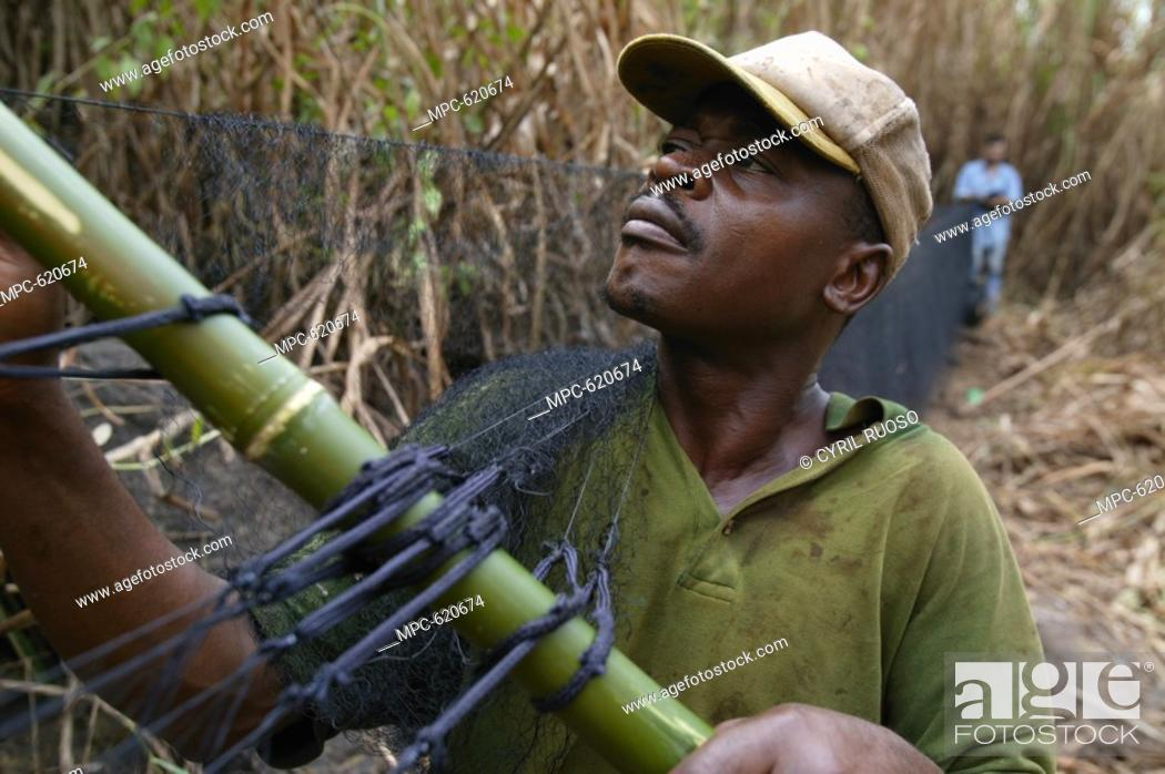 Imagen: RESEARCHER FRONT AND ORNITHOLOGIST PIERFRANCESCO MICHELONI, ERECTING MIST NET TO COLLECT MIGRATING BARN SWALLOWS FOR BANDING, EBAKKEN, NIGERIA.