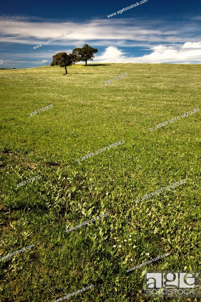 Stock Photo: Spring in the countryside of southern Spain.