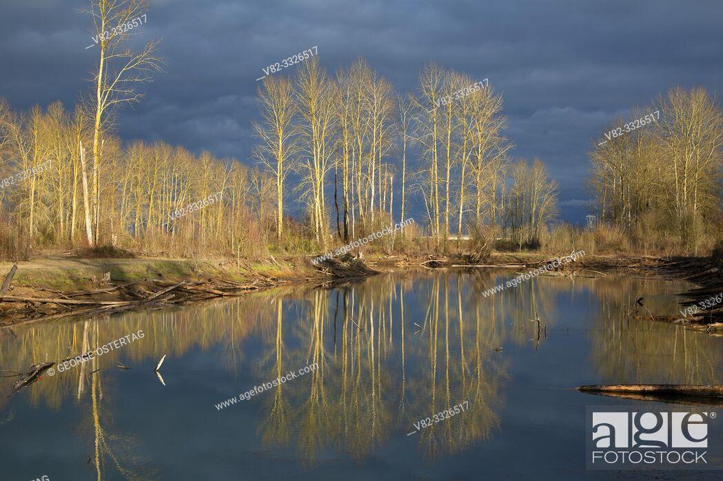 Stock Photo: Wildlife pond, St Louis Ponds Wildlife Area, Oregon.