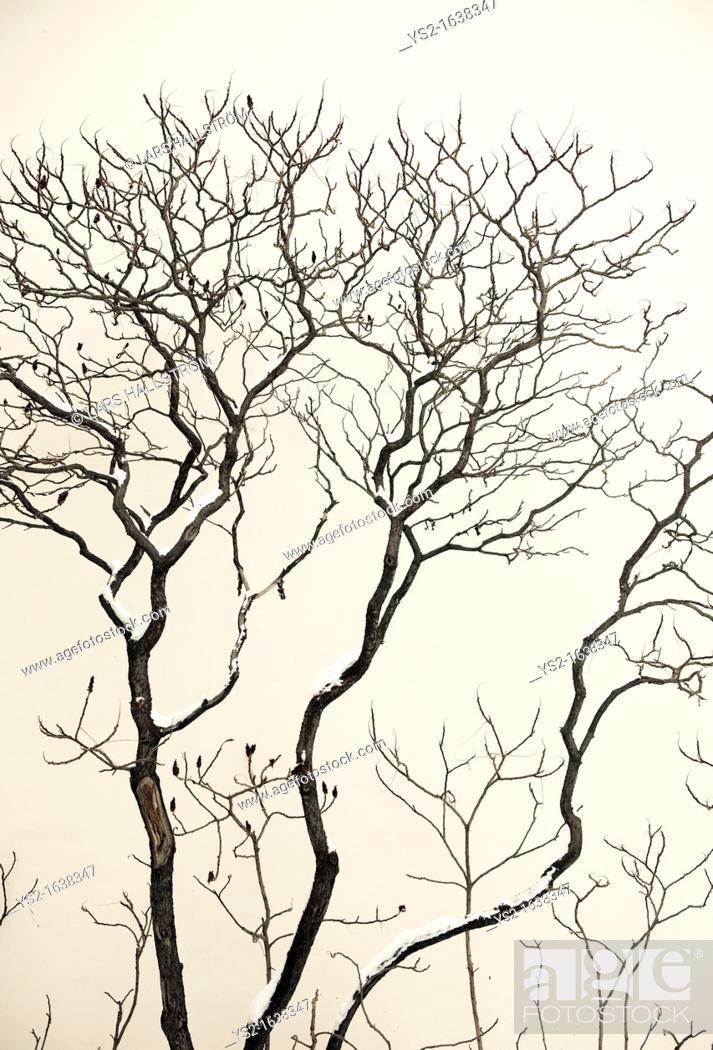Stock Photo: Tree with snow.