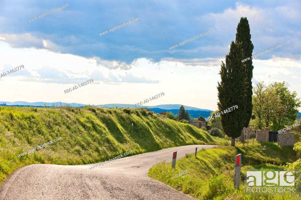 Stock Photo: Country road, cypresses, Tuscany, Italy, Europe, Cupressus sempervirens,.