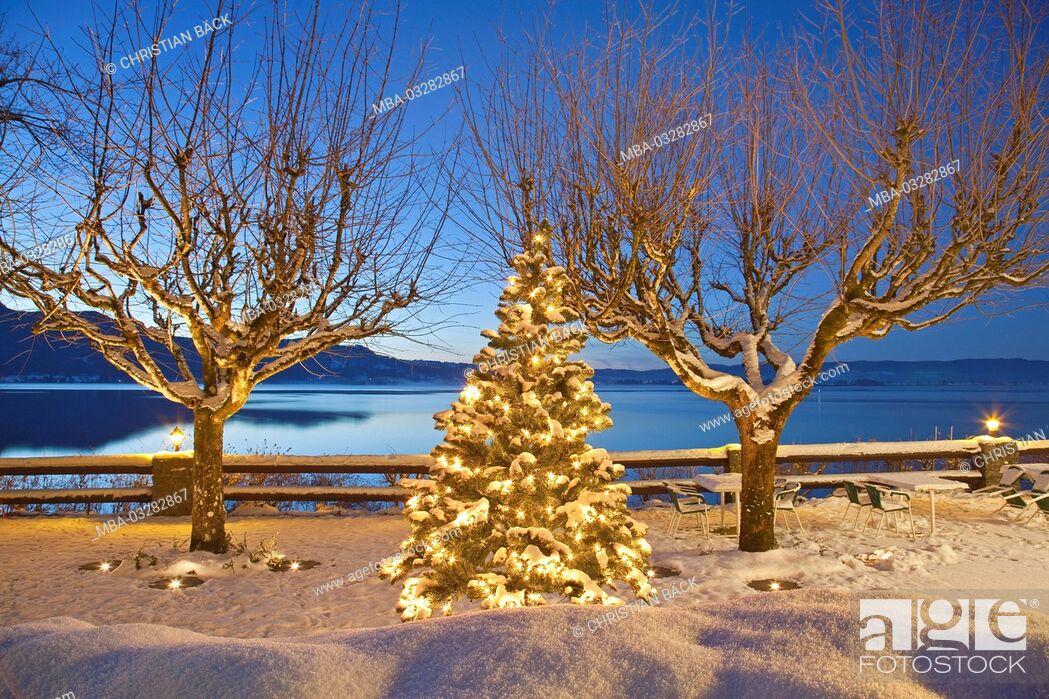 Imagen: Christmas tree at the lake Kochelsee, terrace at the sea hotel 'Grauer Bär', Kochel am See, Upper Bavaria, Bavaria, Germany,.