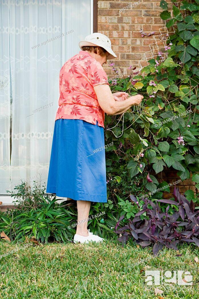 Imagen: Senior woman gardening.