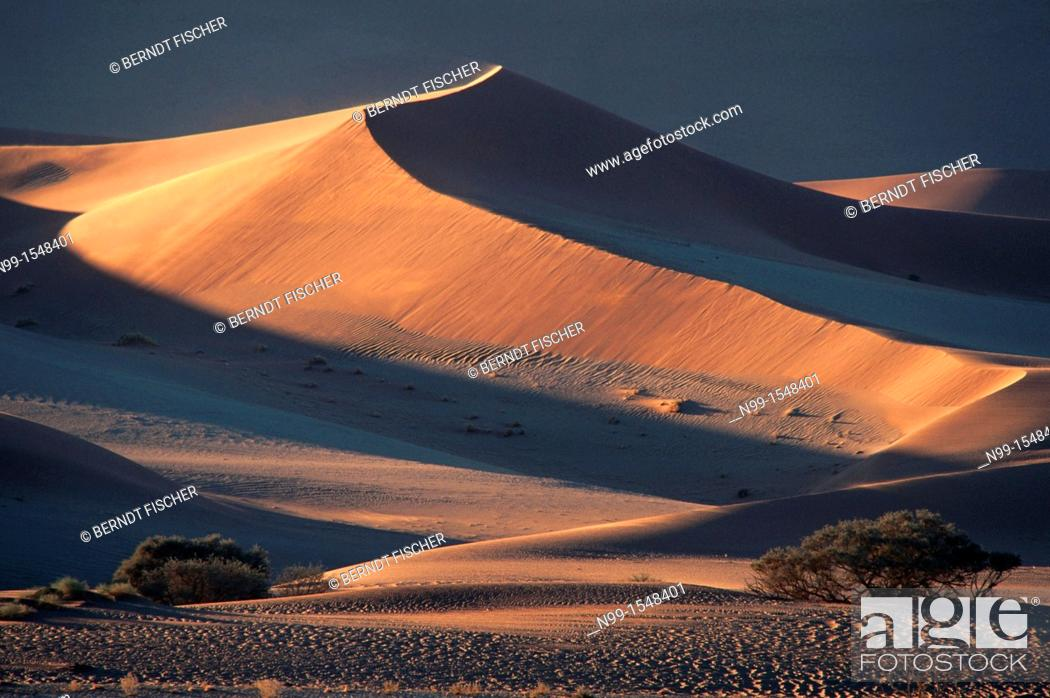 Stock Photo: Sossus Vlei, Namib Desert, Namib-Naukluft Park, sand dunes, camel thorn, sunset light, Namibia.