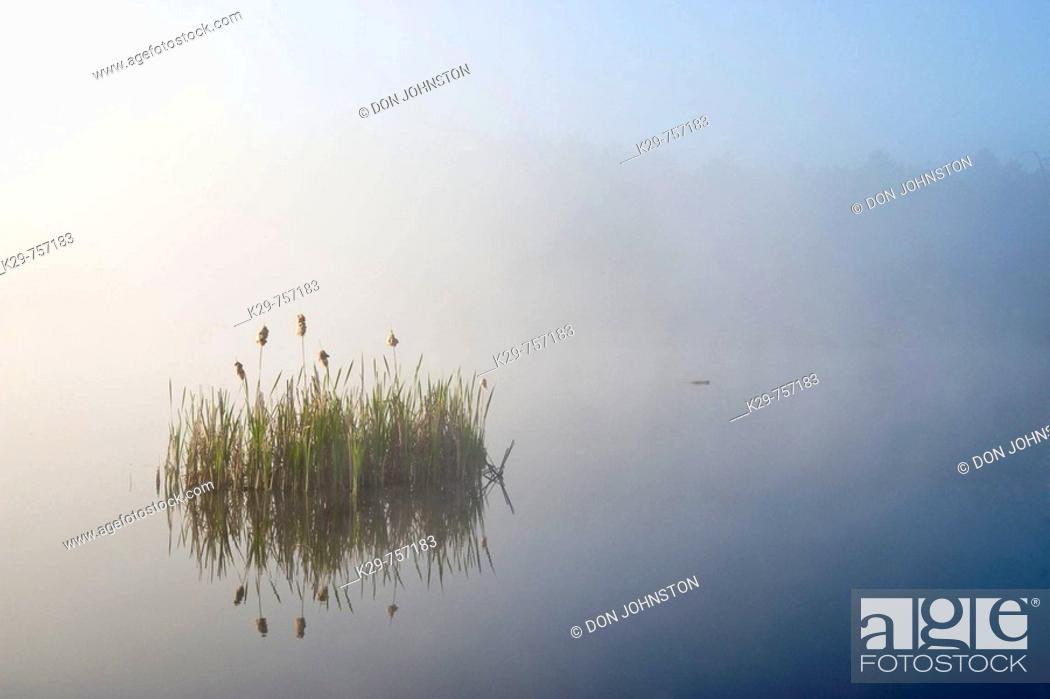 Stock Photo: Aquatic vegetation in fog in beaver pond at sunrise.