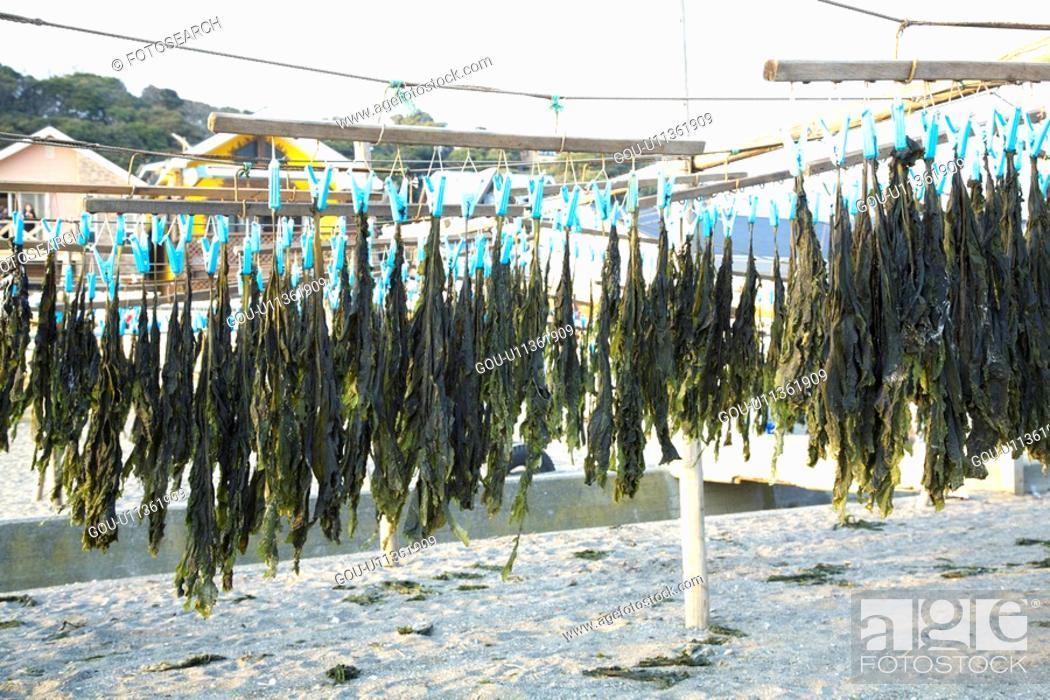 Stock Photo: Hanging wakame.
