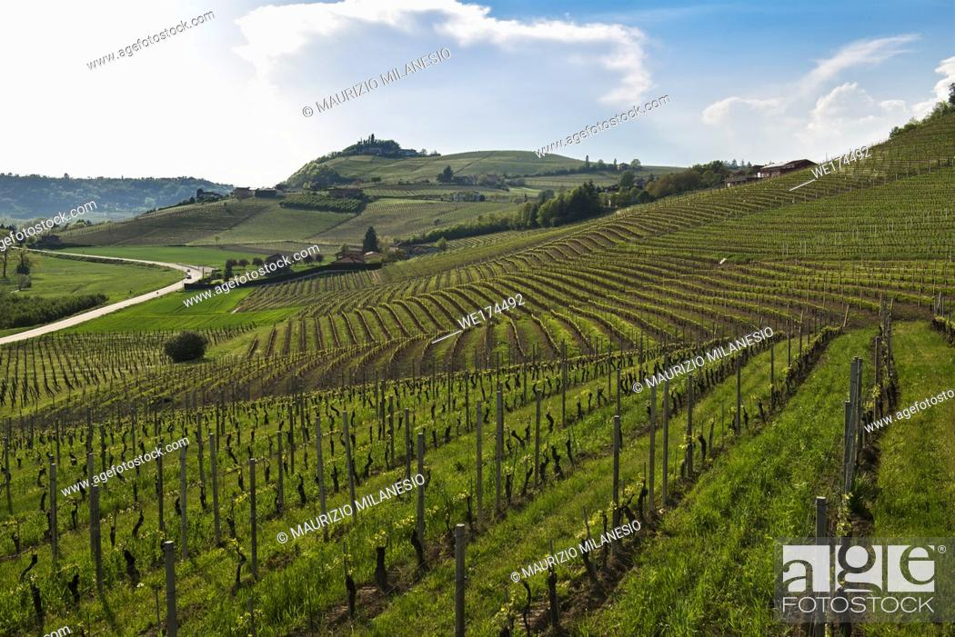 Stock Photo: View on hills with cultivated vineyards and woods. Piedmont, Italy.