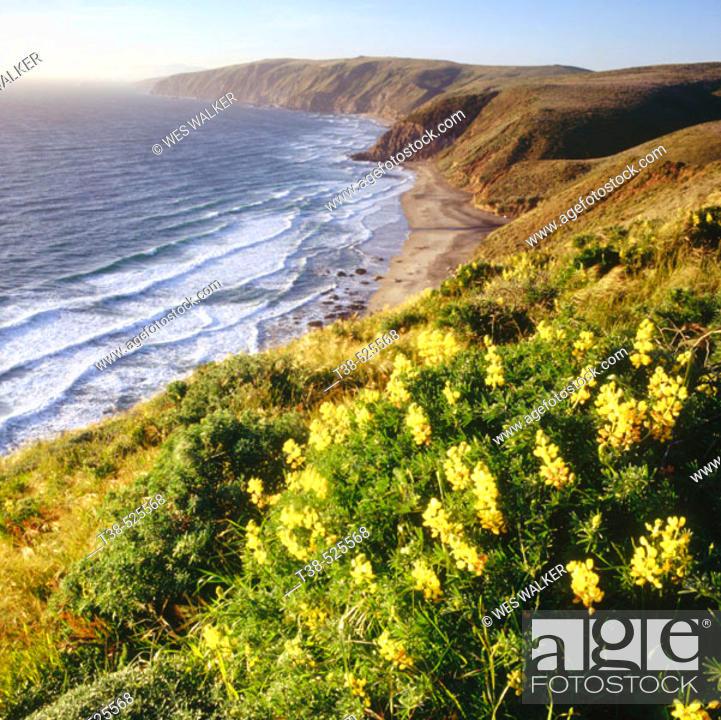 Stock Photo: Wildflowers. Point Reyes National Seashore. California. USA.