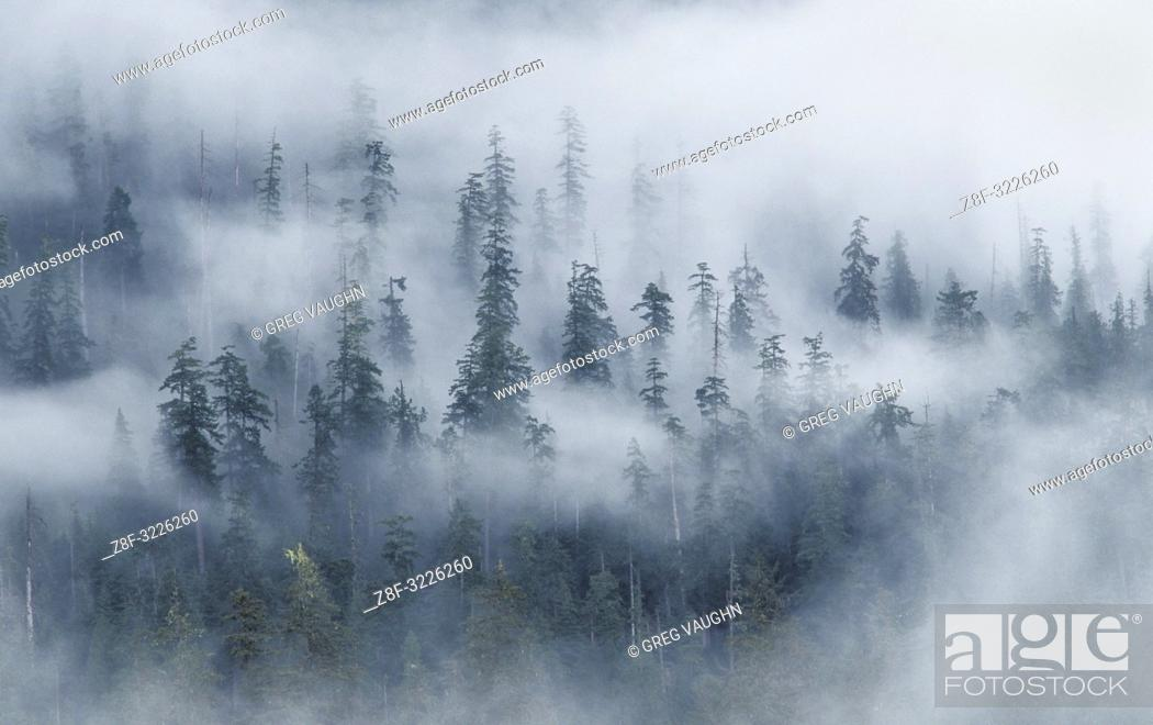 Imagen: Forest and fog above Hoh River, from Spruce Nature Trail; Olympic National Park, Washington.