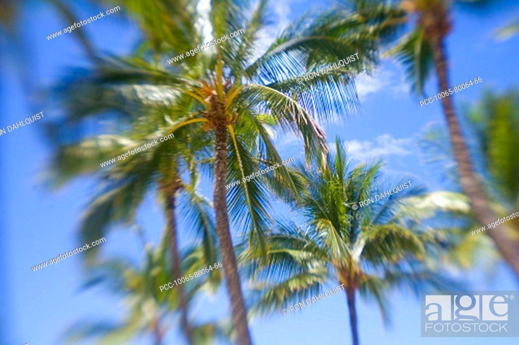 Stock Photo: Hawaii, Palm trees with blur around edges.