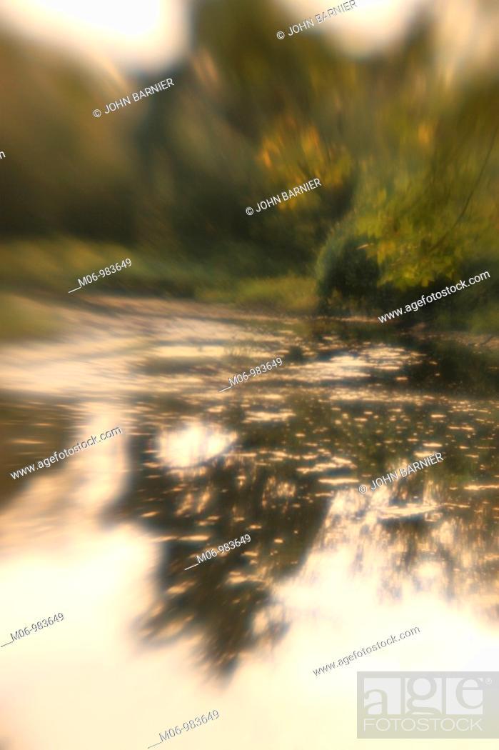 Imagen: dreamy scene of trees by water.