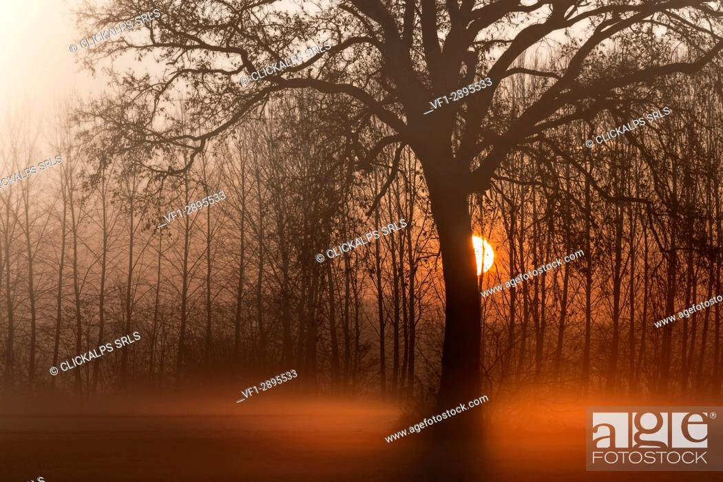 Stock Photo: Turin province, Piedmont, Italy, Europe. Magic sunrise in the Piedmont plain.