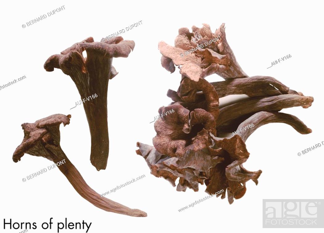 Stock Photo: Horns of plenty.