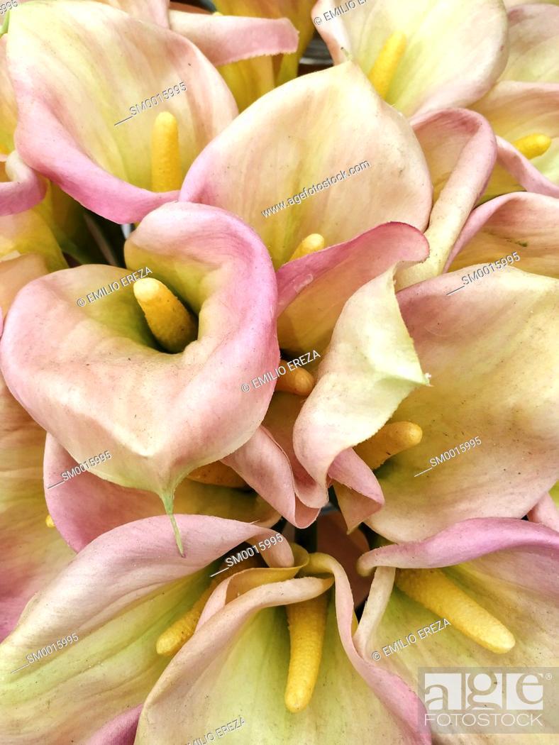 Stock Photo: Artificial calla lilies.