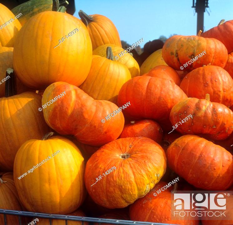Stock Photo: two different pumpkins / Cucurbita maxima.