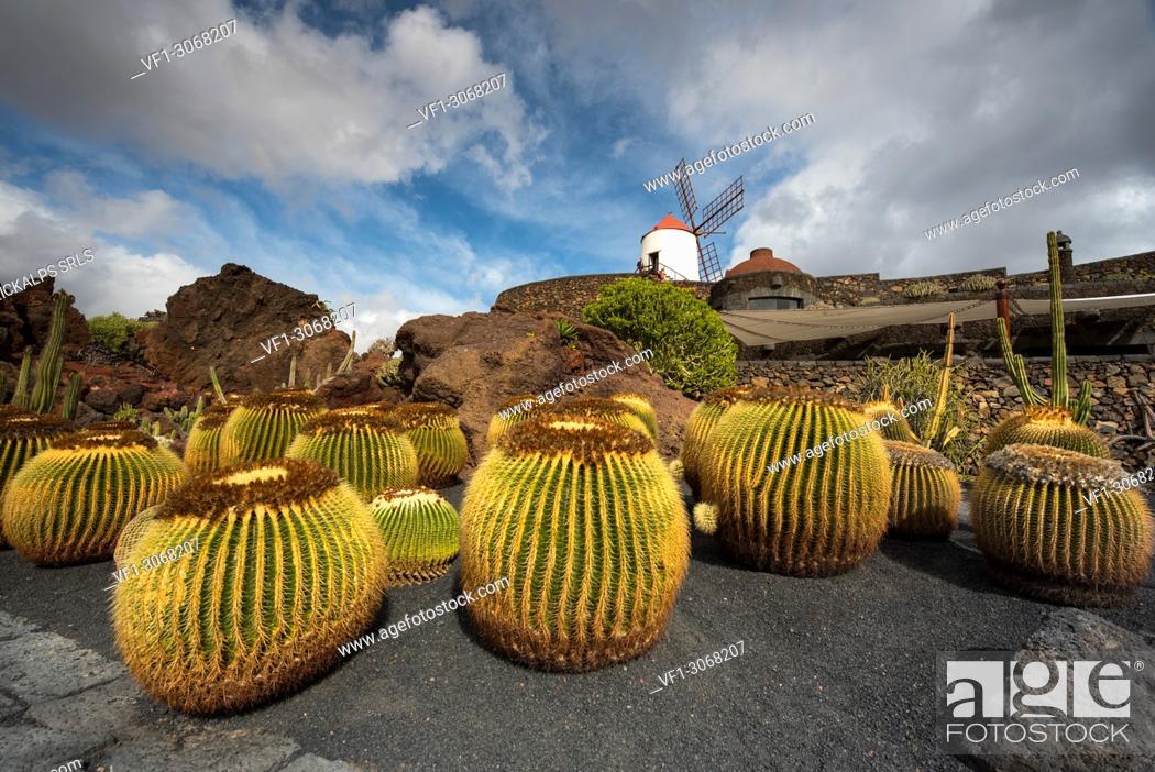 Stock Photo: Jardín de Cactus, designed by Cesar Manrique, Lanzarote, Canary island, Spain, Europe.