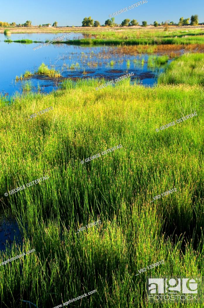 Stock Photo: Lost Slough Wetlands Walk marsh, Cosumnes River Preserve, California.