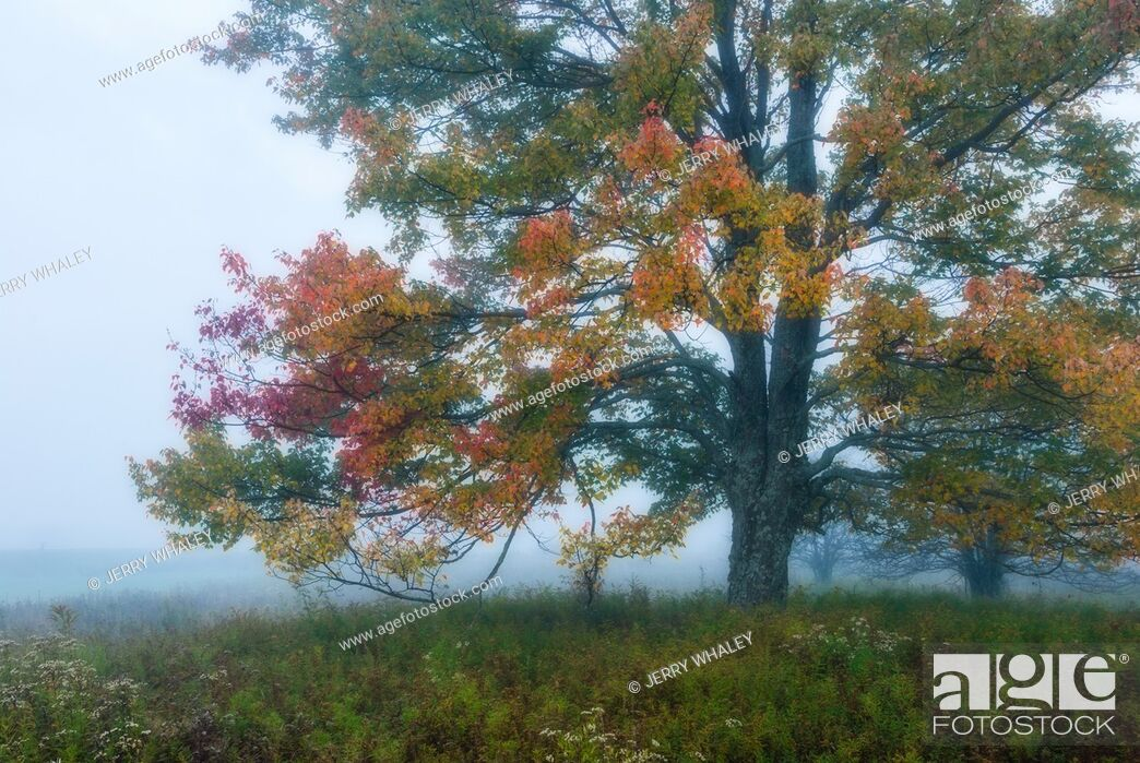 Stock Photo: Autumn Morning Glow in Canaan Valley State Park, WV.
