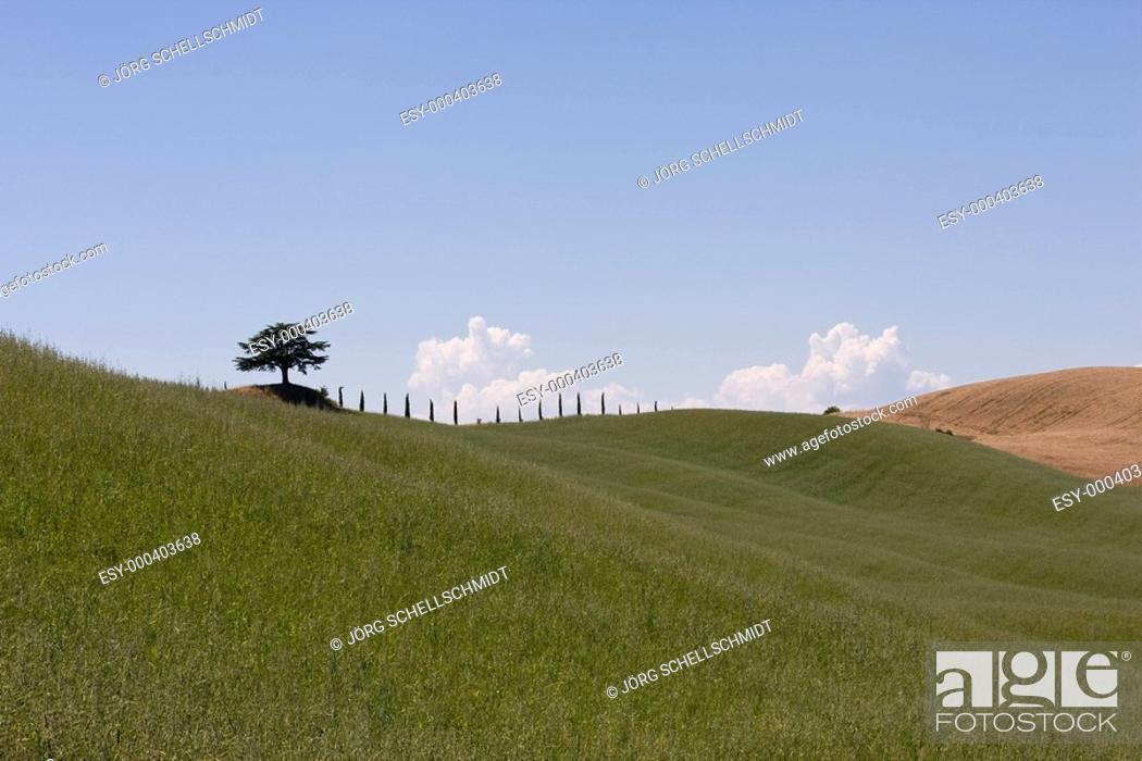 Stock Photo: Baum auf Hügel.