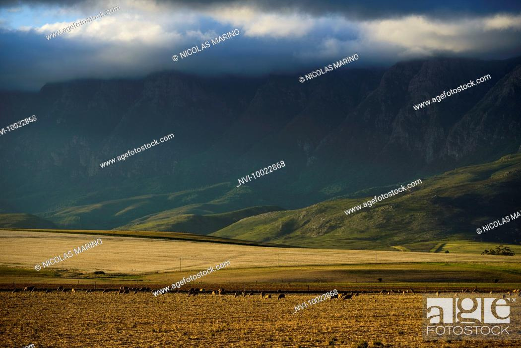 Stock Photo: The garden route, Western Cape, South Africa.
