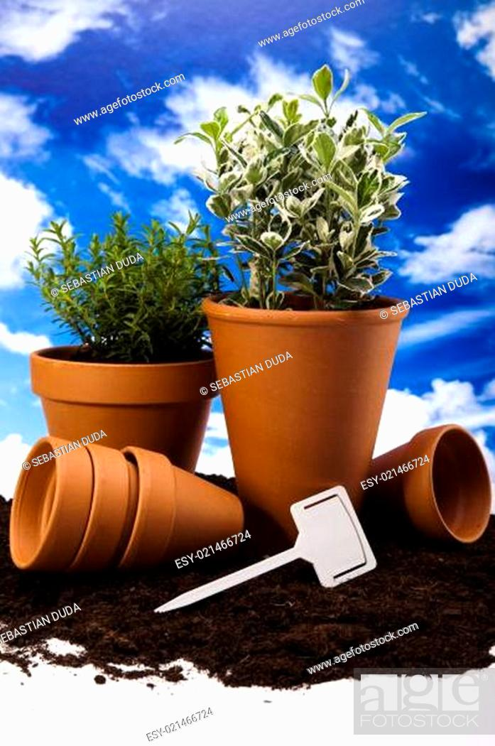 Stock Photo: Gardening concept, work tools, plants.
