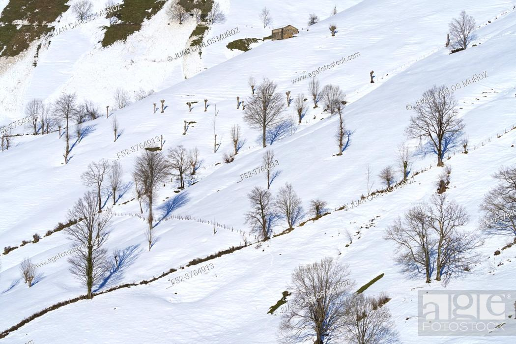 Stock Photo: Pasiegas cabins in winter in the Valle del Miera in the Valles Pasiegos de Cantabria. Spain. Europe.