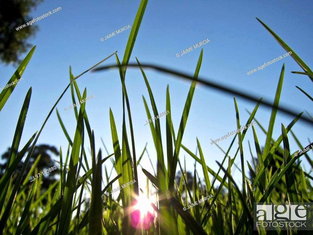 Stock Photo: Grass with sunlight filtering through.