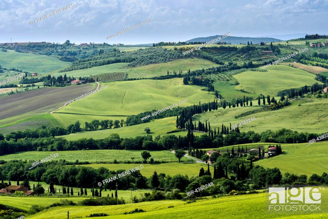 Stock Photo: Typical green Tuscan landscape in Val d'Orcia with hills, fields, trees, cypresses and cloudy sky, Pienca, Tuscany, Italy.