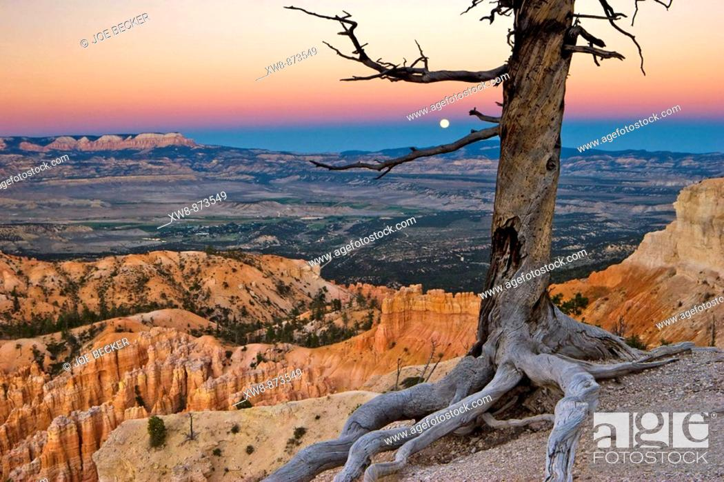 Stock Photo: Moonrise through the earth shadow as seen in from Bryce Point in Bryce Canyon National Park.