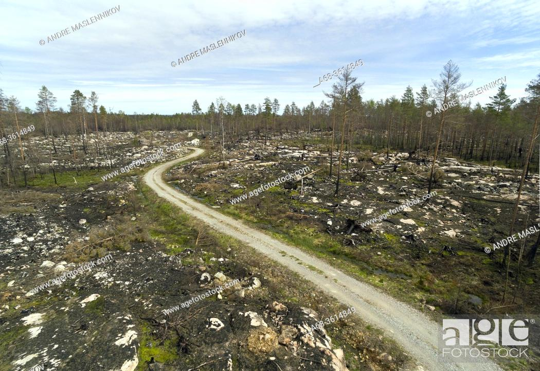 Stock Photo: Forest road through the fire-damaged area in Västmanland. Most of the trees outside the newly formed nature reserve have been felled and transported away.