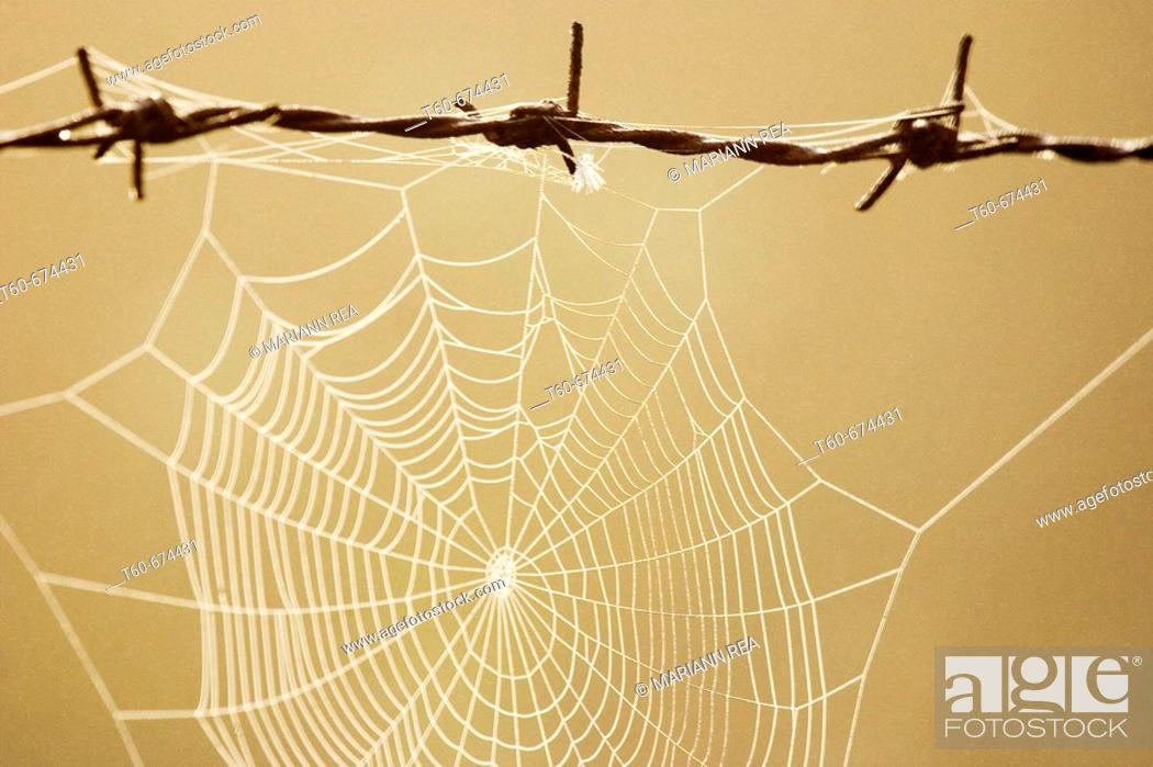 Stock Photo: Spiderweb on a barbed wire.