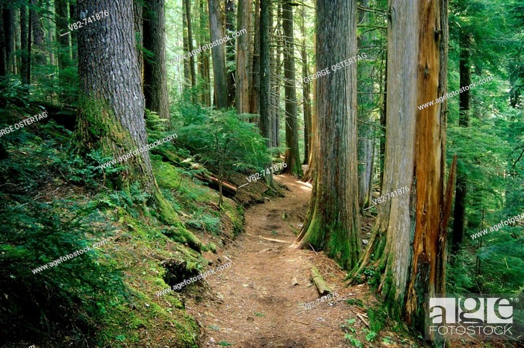 Stock Photo: Cheakamus Lake Trail, Garibaldi Provincial Park, BC, Canada.